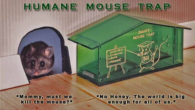 Catches Mice That Other Traps Can't
